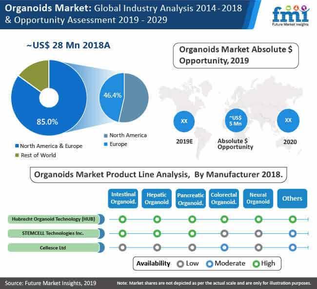 organoids market