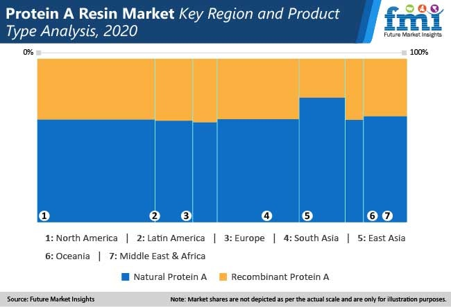 protein a resin market key region and product type analysis